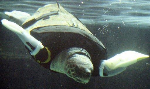 cyborg-turtle